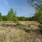"""Lebensraum Vipera berus berus, Natura 2000 (FFH) Gebiet """"Am Schwertstein – Himmelsgrund"""", nordwestlich Rüdersdorf, Landkreis Greiz, Freistaat Thüringen, 14.05.2009, Foto B. Trapp (www.bennytrapp.de)."""