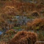 Lebensraum von Rana temporaria temporaria, Umgebung Glendalough, Wicklow-Mountains-National Park (Páirc Náisiúnta Shléibhte Chill Mhantáin), County Wicklow, 13.03.2010, Foto R. Gandola.