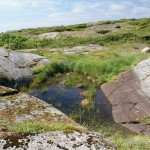 Lebensraum und Laichgewässer Epidalea calamita, Insel Norra Horten, Skåne län, landsdelar Götaland, 26.06.2009, Foto P. Nyström.