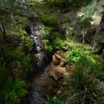 Lebensraum Euproctus montanus, Salamandra corsica und Discoglossus montalentii, Col de Bavella, Département Corse-du-Sud, 31.05.2013, Foto B. Trapp (www.bennytrapp.de).