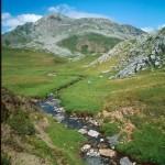 Lebensraum Alytes obstetricans obstetricans, Calotriton asper, Lissotriton helveticus helveticus, Bufo bufo, Rana temporaria canigonensis, Col de Pourtalet, Département Pyrénées-Atlantiques, Midi-Pyrénées, 13./14.07.2004, Foto A.+Ch. Nöllert.