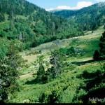 Lebensraum Rana temporaria canigonensis, Bachtal des El Cadi, Umgebung Jaça de Marialles, Massiv de Canigou, Département Pyrénées-Orientales, Languedoc-Roussillon, 28.07.2004, Foto A.+Ch. Nöllert.