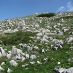 Lebensraum Vipera berus bosniensis, Durmitor Massiv (Dinariden), Opština Plužine, 26.05.2009, Foto J. Hill.
