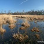 Lebensraum Lissotriton helveticus helveticus, Feuchtgebiet Klotterpeel bei Rips, Provincie Noord-Brabant, 08.03.2014, Foto J. Herder/RAVON (www.digitalnature.org).