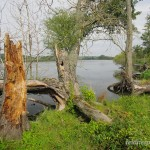 Lebensraum von Pelophylax ridibundus und Natrix natrix natrix, Oder bei Gryfino, Landschaftsschutzpark Unteres Odertal, Województwo Zachodniopomorskie, 17.09.2011, Foto A.+Ch. Nöllert.