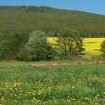 Lebensraum Salamandra salamandra salamandra, Umgebung Michalovce, Košický kraj, April 2008, Foto T. Pröhl (fokus-natur.de).