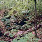 Lebensraum Salamandra salamandra salamandra, Rot-Buchenurwald bei Kicherely, Chustskyj rajon, Sakarpatska oblast, 07.05.1996, Foto K. Grossenbacher.
