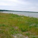 Lebensraum und Fortpflanzungsgewässer Epidalea calamita, Svitjaz-See, Wolynska oblast, 29.07.2014, Foto Y. Pysanets.