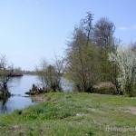 Lebensraum Pelophylax ridibundus, in der Umgebung von Hola Prystan am Fluss Kinska, einem Mündungsarm des Dnepr in das Schwarze Meer, Hola Prystan rajon, Chersonska oblast, 29.07.2014, Foto Y. Pysanets.