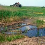 Lebensraum Bombina bombina, Szeged, Fehér-tó Schutzgebiet, Komitat Csongrád, 13.05.1994, Foto A.+Ch. Nöllert.