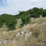 Lebensraum von Dolichophis caspius caspius, Umgebung Villány, Villány-Gebirge, Komitat Baranya, 04.06.2011, Foto J. Hill.