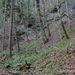 Lebensraum Salamandra atra atra, Rüschegg (750 m ü. NN), Kanton Bern, 25.04.2006, Foto K. Grossenbacher.