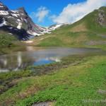 Lebensraum Rana temporaria temporaria, Sulzibielsee (2295 m ü. NN) bei Grindelwald, Kanton Bern, 07.07.2012, Foto K. Grossenbacher.