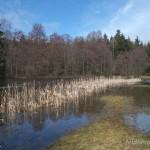"Rana temporaria temporaria, Laichgewässer, NSG ""Dreba-Plothener Teichgebiet"", Saale-Orla-Kreis, Freistaat Thüringen, 14.04.2013, Foto A.+Ch. Nöllert."