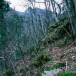 Lebensraum Speleomantes italicus, Salamandrina perspicillata und Salamandra salamandra gigliolii, Cardoso (Alpi Apuane), Provincia di Lucca, Regione Toscana, 13.04.2003, Foto: A.+Ch. Nöllert.