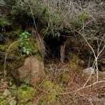 Lebensraum Speleomantes sarrabusensis, Sardegna, 04.03.2009, Foto: B. Trapp (www.bennytrapp.de).