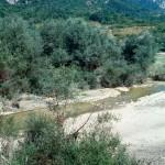 Lebensraum von Bufo bufo und Pelophylax kl. hispanicus am Fiume Sangro bei Barrea, Provincia dell'Aquila, Regione Abruzzo, 23.08.1993, Foto: A.+Ch. Nöllert.