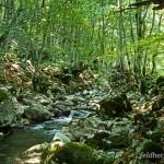 Lebensraum Rana italica, Rio Torto bei Alfedena, Provincia dell'Aquila, Regione Abruzzo, 22.08.1993, Foto: A.+Ch. Nöllert.