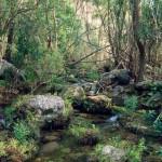 Lebensraum Natrix natrix sicula, Monti Iblei, Provincia di Siracusa, Sicilia. Im Bachlauf befanden sich zudem große Larvenschwärme von Bufo bufo, 15.04.1995, Foto: A.+Ch. Nöllert.