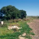 Lebensraum Zamenis situla und Chalcides ocellatus tiligugu, östlich Marzamemi (Pachino), Provincia di Siracusa, Sicilia, 13.04.1995, Foto: A.+Ch. Nöllert.