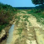 Lebensraum Bombina variegata, Motovun, Istarska županija; im Waldgebiet im Hintergrund Rana latastei, 12.08.1990, Foto: A+Ch. Nöllert.