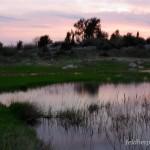 Lebensraum Bufo viridis complex (viridis) in der Abenddämmerung bei Rufbeginn der Männchen, Vidasi, Potok Pag, Ličko-senjska županija, 16.04.2009, Foto: A.+Ch. Nöllert.