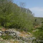 Lebensraum Podarcis siculus campestris, Umgebung Wasserspeicher Ponikve, Potok Krk, Primorsko-goranska županija, 11.04.2009, Foto: A.+Ch. Nöllert.