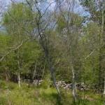 Lebensraum Hierophis viridiflavus carbonarius, Umgebung Wasserspeicher Ponikve, Potok Krk, Primorsko-goranska županija, 11.04.2009, Foto: A.+Ch. Nöllert.