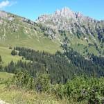 Lebensraum Salamandra atra atra, Hahnenkamm, westlich Höfen, Tirol, 17.08.2014, Foto L.+St. Nöllert