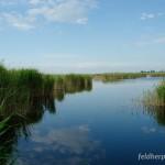 Laichgewässer einer für Mitteleuropa beinahe gigantisch zu nennenden Population von Hyla arborea, Illmitz, Neusiedlersee, Burgenland, 16.05.2008, Foto: A.+Ch. Nöllert.