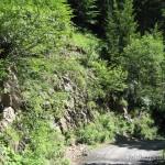 Lebensraum von Iberolacerta horvathi, Straniger Alm, Karnische Alpen, Kärnten, 06.07.2007, Foto: J. Hill.
