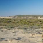 Lebensraum (trocken gefallenes Laichgwässer) von Bufo calamita, Dünenbereich von Carrapateira, Distrito de Faro, Região do Algarve, 08.10.2013, Foto A.+Ch. Nöllert.
