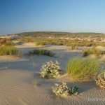 Lebensraum Podarcis carbonelli carbonelli und Bufo calamita, Carrapateira, Distrito de Faro, Região do Algarve, 06.10.2013, Foto: A.+Ch. Nöllert.