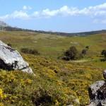 Lebensraum Vipera seoanei seoanei, Parque Nacional da Peneda-Gerês, Região Norte, 12.06.2008, Foto: B. Trapp (www.bennytrapp.de).