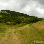 Lebensraum von Anguis colchica in den Trascău Bergen bei Rimetea, Judeƫ Alba, 29.06.2011, Foto T. Sos.