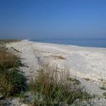 Lebensraum von Natrix tessellata tessellata an der Küste des Schwarzen Meeres, Judeƫ, Constanţa, Dobrogea de Nord, 25.04.2013, Foto B. Trapp (www.bennytrapp.de).