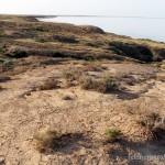 Lebensraum von Phrynocephalus helioscopus, Inder See, südöstlich Inderbor, Atyrau oblysy, Republik Kasachstan, 1.06.2012, Foto S. N. Litvinchuk.