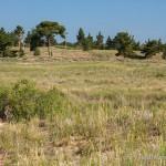 Lebensraum Vipera renardi renardi, Naturreservat Naurzum südlich von Qostanai, Qostanai oblysy, Republik Kasachstan, Mai 2009, Foto T. Pröhl (www.fokus-natur.de).
