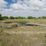 Lebensraum Discoglossus galganoi galganoi, Lagunas del Acebuche im Parque Nacional de Doñana, Provincia de Huelva, Communidad autónoma Andalucía, 01.10.2013, Foto A.+Ch. Nöllert.