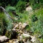 Lebensraum Psammodromus hispanicus, Riópar Viejo in der Sierra de Alcaraz, Provincia de Albacete, Comunidad autónoma de Castilla-La Mancha, 03.07.1996, Foto A.+Ch. Nöllert.