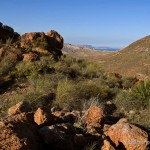 Lebensraum Hemorrhois hippocrepis, Retamar, Parque Natural de Cabo de Gata-Níjar, Retamar, Provincia de Almería, Communidad autónoma Andalucía, 07.04.2007, Foto B. Trapp (www.bennytrapp.de).