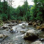 Lebensraum Darevskia rudis bischoffi und Darevskia clarkorum, Tscharnali-Tal südlich Batumi (Nordrand Pontus-Gebirge), Atscharis Awtonomiuri Respublika, 22.06.2003, Foto: W. Bischoff.