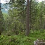 Lebensraum Salamandra atra atra, Nordufer des Eibsee (Grainau), nordwestlich Zugspitze, ca. 990 m ü. NN, Landkreis Garmisch-Partenkirchen, Oberbayern, Freistaat Bayern, 18.06.2015, Foto: A.+Ch. Nöllert.