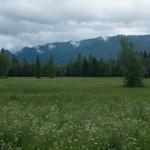 """Lebensraum Vipera berus berus, NSG """"Kochelfilz"""" bei Altenau, ca. 830 m ü. NN, Landkreis Garmisch-Partenkirchen, Oberbayern, Freistaat Bayern, 21.06.2015, Foto: A.+Ch. Nöllert."""