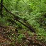 Typischer Landlebensraun, Foto: U. Schulte