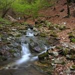 MaßnahmenVor allem an fischfreien Bächen in Laub- und Buchenwäldern findet man oft zahlreiche Larven, Foto: A. Meyer