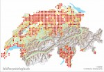 Verbreitung in der Schweiz auf der Basis von 25-km²-Quadranten. Rot: Nachweise ab 2005; gelb: Nachweise bis 2004 (meist auf fehlende Kartierungsaktivität zurückzuführen). Quelle: karch.