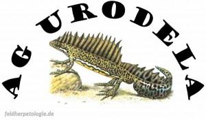 Amphib des Jahres 2016_Feuersalamander_Salamandra salamandra_Sponsor_Logo_dght-ag_urodela