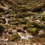 Kühl, nährstoffarm und langsam fließend – das Larvenparadies, Foto: A. Kwet