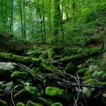 Strukturreicher Waldlebensraum, Foto: A. Nöllert